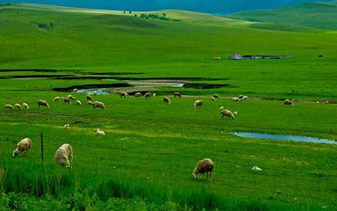 内蒙古:绿色是价值,生态是责任