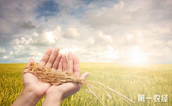 """""""十三五""""现代农业产业技术体系启动 科学家谈科技农业"""