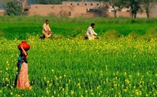 巴基斯坦:2018年粮食及谷物加工展的时间和地点