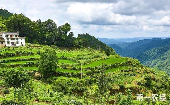 四大惠农政策给农村带来致富机遇