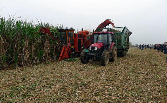 广西:推进甘蔗生产全程机械化