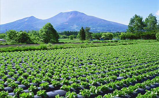 甘肃武山:推进蔬菜供给侧结构性改革 促进蔬菜经济转型升级