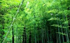 2017中国第8届林产品与木制品展览会时间、地点及详情