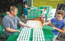 """欧洲多国爆发""""毒鸡蛋""""丑闻 敲响了欧洲食品安全警钟"""
