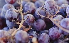 食安知识:葡萄上的白霜是什么?是农药残留吗?