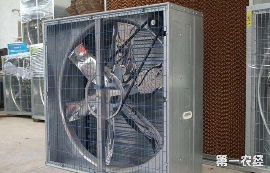 猪舍降温设备:降温风机与降温水帘