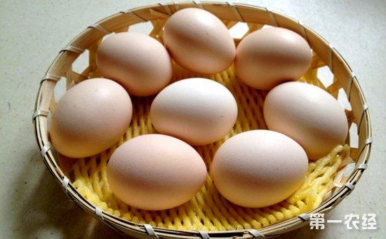 2017年8月8日最新鸡蛋价格行情 淘汰鸡价格行情 白羽肉毛鸡价格行情