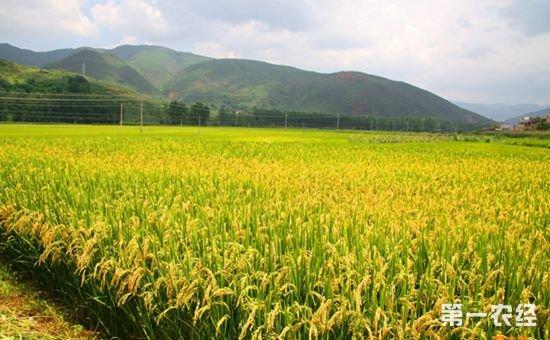 安徽:多种产业共同推进阜阳扶贫攻坚