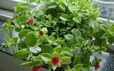 5种适合在阳台种植的植物介绍!分分钟阳台变花