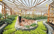 展望有机农业3.0| 有机农业将迎来广阔的蓝天