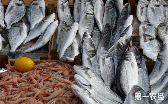 上半年我国渔业经济形势稳中向好