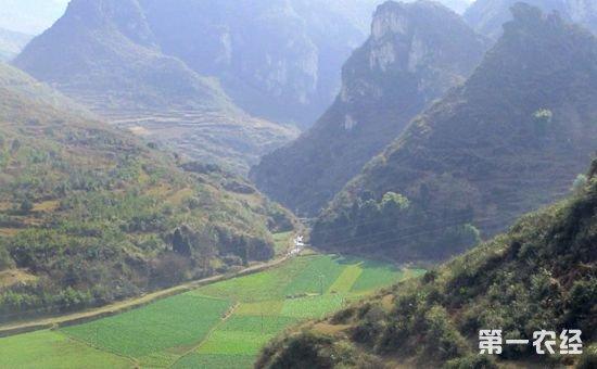 贵州:打造特色现代农业产业园