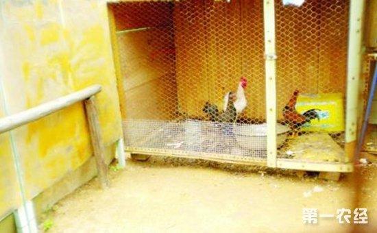 """山东:幼儿园成""""养鸡场""""吓坏家长   居民忧心安全隐患的发生"""