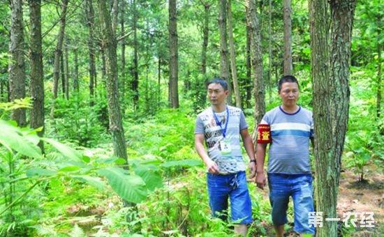 河北:3.3万贫困群众将成为生态护林员