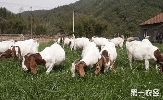未来养殖业该怎么过?会有转机吗?