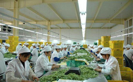 哈尔滨:大力发展农产品精深加工业