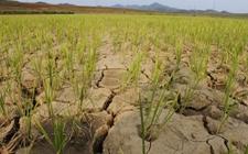 朝鲜作物生产因长期干旱而受到重挫 对大部分人口的粮食安全造成威胁