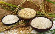 菲律宾大米进口数量限制(QR)制度已正式失效