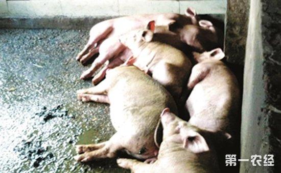 柳州:惊!猪圈旁生产豆腐  一豆腐加工黑作坊被查处