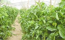 生物固氮——促进农业可持续发展
