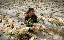 农产品滞销的原因及解决方案