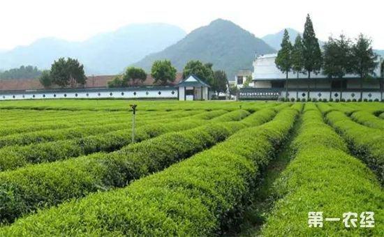 湖北:国有农场土地将进行确权登记发证