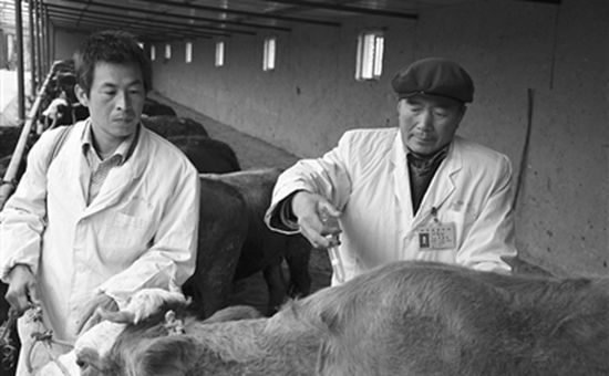 甘肃临夏:今年上半年畜牧业各项工作取得了较好成绩