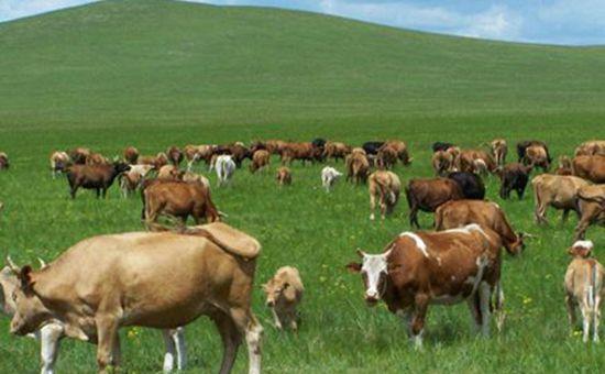 <b>中国畜牧兽医学会信息技术分会年会在鹤壁召开</b>