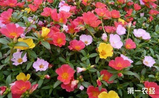 5种适合养在夏季的盆栽植物介绍!越晒越容易爆盆