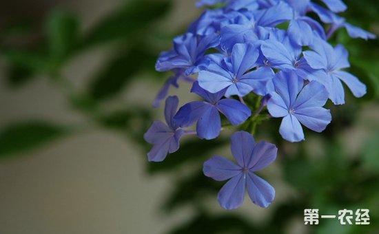"""9种适合懒人养的盆栽植物介绍!连""""养花杀手""""都难养死"""