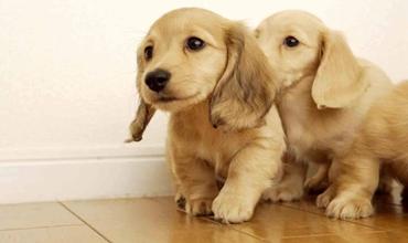 怎么给狗狗喂药?怎么用针管给狗喂药?