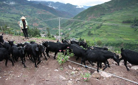 云南凤庆:不断推进畜牧业持续健康发展