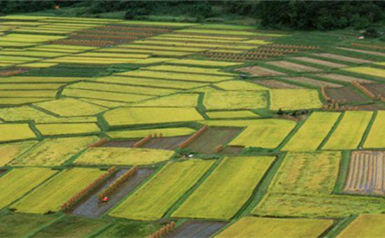 中央鼓励各地开展农业适度规模经营