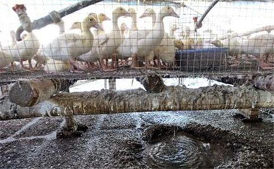 <b>山东淄博:疏堵并举解养殖污染问题</b>
