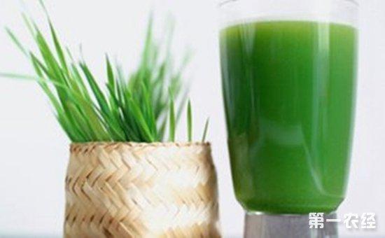 喝麦苗汁能抗癌、造血、治三高?专家:不靠谱!