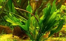 水草有哪些?各种水草图片及名称