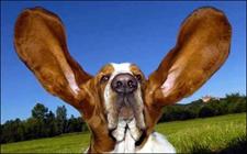 狗狗耳朵烂了用什么药?