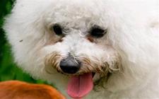 狗狗去泪痕什么最管用?清洗宠物泪痕的药水