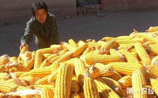 吉林省粮食产销协作(洽谈)会在长春召开