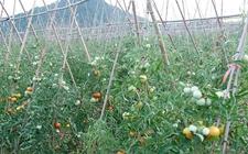 湖南省凤凰县农业产业种植园助力农民增收致富