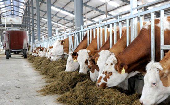 <b>黑龙江:推进供给侧改革 推动畜牧产业绿色发展</b>