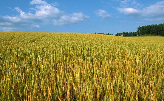 """专家解读《""""十三五""""农业农村科技创新专项规划》"""