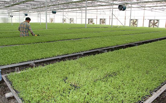青海海东:以科技创新为引擎 建设生态循环可持续发展新农业