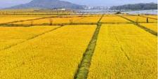 宁夏:为品牌发展农业供给侧结构进行改革成果斐然