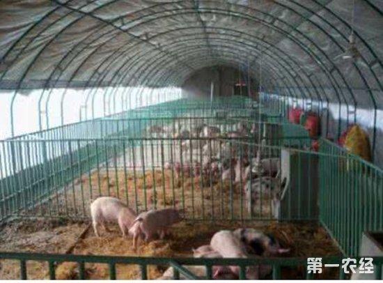 养猪大棚对猪危害大吗?利弊有哪些? - 养猪场 - 第一