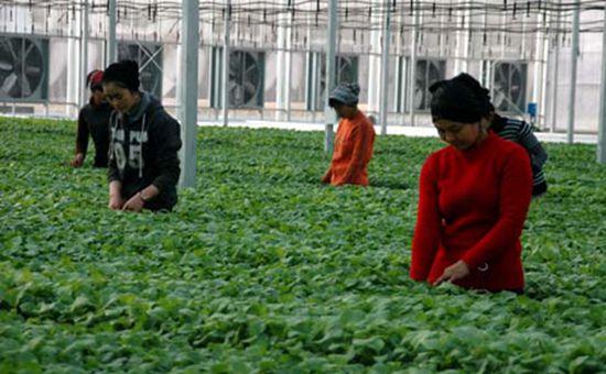 农业部:农业援疆力度不断加大 援疆资金已达342亿元