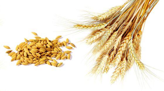 农业保险补贴有调整 中国三大主粮都补贴多少钱?