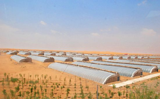 <b>甘肃:充分利用沙漠戈壁资源 推动戈壁农业发展</b>