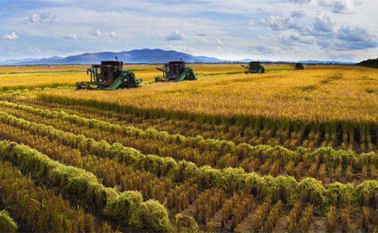 农村这5类经营主体将得到国家大力帮扶