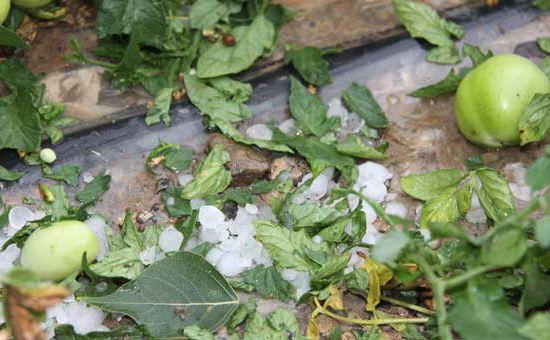山西:洪涝风雹灾害已致12万人受灾